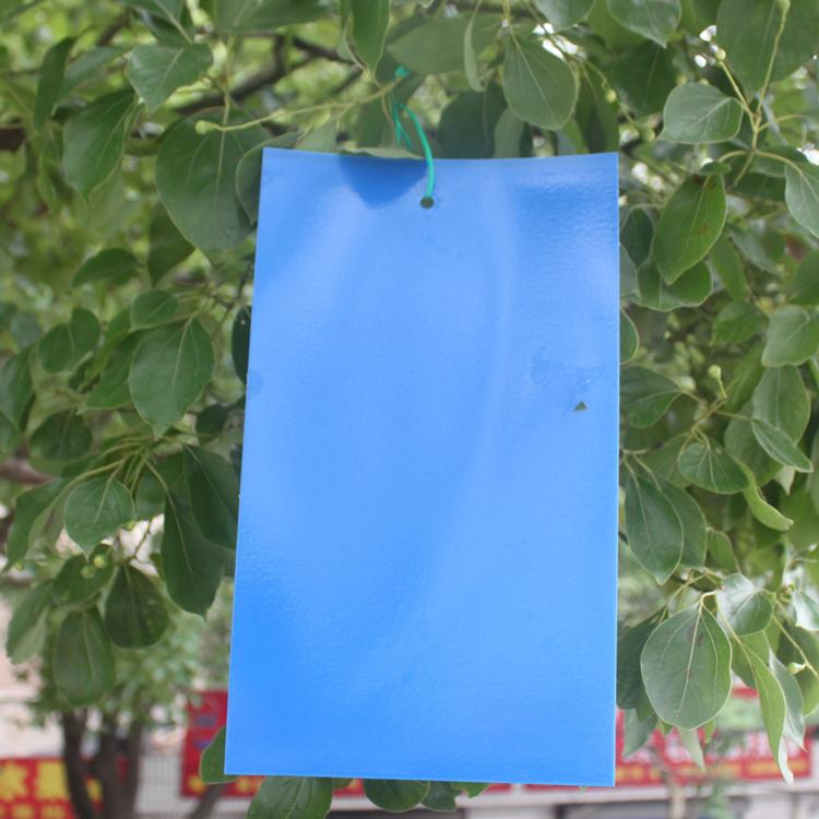 蓝板-粘虫蓝板厂家