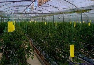 杭州蔬菜基地引进粘虫黄板保护蔬菜安全