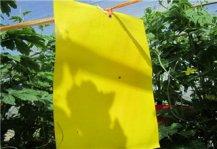 黄板粘虫效果